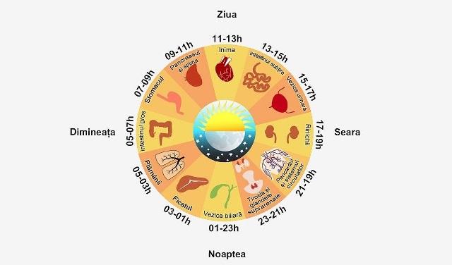 Ceasul BIOLOGIC al ORGANISMULUI